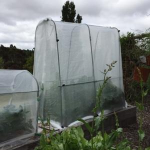 tomato-protection-house